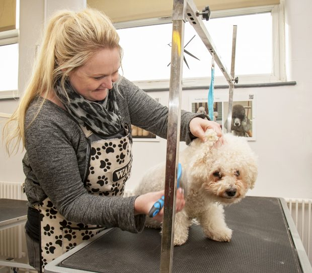 An apprentice brushing a dog.
